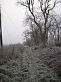 A frosty outlook on the walk to Lambden burn - geograph.org.uk - 862268.jpg