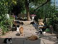A lazy day at the Richmond Animal Protection Society cat sanctuary.jpg