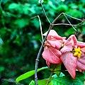 A magia das vegetações do meu Sergipe. 11.jpg