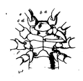 A monograph of the terrestrial Palaeozoic Arachnida of North America progress Page38 fig 42.png