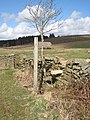 A new stile - geograph.org.uk - 748372.jpg