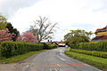 A road lined with flowering trees through Matching Tye, Essex, England.jpg