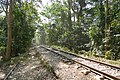 A train crossing through Lawachara National Park 04.jpg