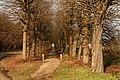 Abdij van Herkenrode, geleide lindedreef - 375130 - onroerenderfgoed.jpg
