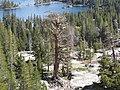 Above Upper Echo Lake (3071919531).jpg