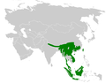 Abroscopus distribution map.png