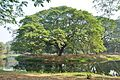 Acharya Jagadish Chandra Bose Indian Botanic Garden - Howrah 2011-01-08 9753.JPG