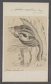 Achatina mauritiana - - Print - Iconographia Zoologica - Special Collections University of Amsterdam - UBAINV0274 088 12 0008.tif