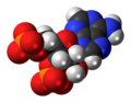 Adenosine-3',5'-bisphosphate-anion-3D-spacefill.png