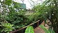 Aerial Walkway - Rainforest Biome @ Eden Project (9757432826).jpg