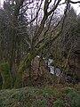 Afon Glasffrwd - geograph.org.uk - 721091.jpg