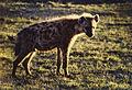 Africa 1987.10 (1434258970) (2).jpg