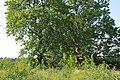 Aleja, Ķeipenes pagasts, Ogres novads, Latvia - panoramio.jpg