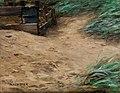 Alexander Koester Holzgatter am Sandhügel mit Schilfgras.jpg