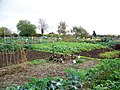 Allotments, Bradford Abbas - geograph.org.uk - 1566275.jpg