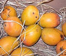 Photo of 10 large mangoes