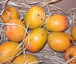 definition of mango