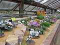 Alpine House at Wisley 5722.JPG