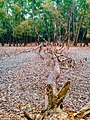 Altadighi National Park 4.jpg