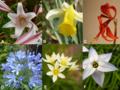 Amarilidáceas Diversidad General para la flor.png