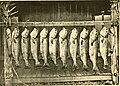 American fishes; a popular treatise upon the game and food fishes of North America, with especial reference to habits and methods of capture (1888) (14771506245).jpg