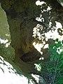 Amfiteátrum 5. sz. barlang.jpg