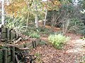 An autumnal scene within Battleston Wood at RHS Wisley - geograph.org.uk - 1562079.jpg