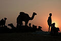 And the Sun Sets on Pushkar Fair.jpg