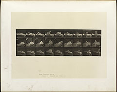 Animal locomotion. Plate 265 (Boston Public Library).jpg