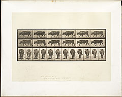 Animal locomotion. Plate 670 (Boston Public Library).jpg