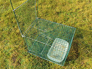 Animal trap on Hilbre Island, Wirral, England.