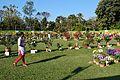 Annual Flower Show - Agri-Horticultural Society of India - Alipore - Kolkata 2013-02-10 4864.JPG