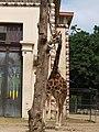 Antwerp Zoo (12210471983).jpg