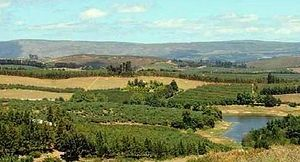 Antonie Viljoen - The undulating hills of the vast Elgin valley - source of much of South Africa's deciduous fruit exports.