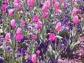 April flowers, Blue Ridge, Ga - panoramio.jpg