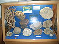 AquariumRhodesMuseumPorifera.jpg