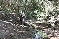 Araguainha - State of Mato Grosso, Brazil - panoramio (1030).jpg