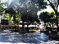 Arboles en la Plaza Bolívar De Chacao.jpg