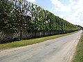 Arbres rue de Valpincon château Bouglainval.jpg