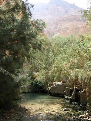 Oasis - Ein Gedi, Israel
