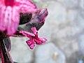 Arya-Pseuderanthemum-jayana-2019 02.jpg