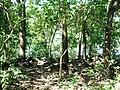 Asurankundu Forest - panoramio.jpg