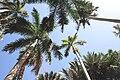 Aswan Kitchener island 5.jpg