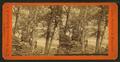 At Minneopa Falls, Minnesota, by Woodward, C. W. (Charles Warren).png