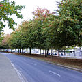 Autumn Leaves (1904706169).jpg