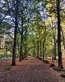 Autumn at Hollybank.jpg