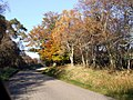 Autumn colours near Altass - geograph.org.uk - 594737.jpg