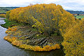 Autumn foliage in Clifden - Southland.jpg