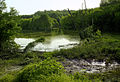 Auwald Donau (2).JPG