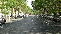 Avenida Blasco Ibáñez, Valencia.JPG